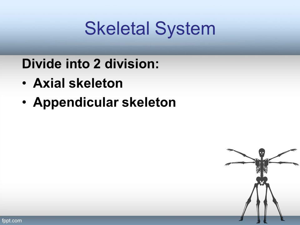 Skeletal System Axial Skeleton Skull Hyoid Bone Auditory ossicle Vertebral Column Rib cage Appendicular skeleton Pectoral gridle Upper extremitas Pelvic gridle Lower extremitas