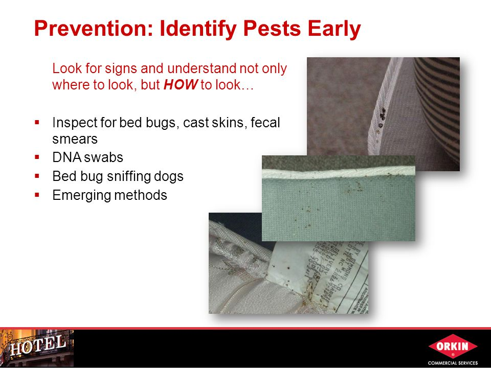 Prevention: Identify Pests Early Look for signs and understand not only where to look, but HOW to look…  Inspect for bed bugs, cast skins, fecal smears  DNA swabs  Bed bug sniffing dogs  Emerging methods