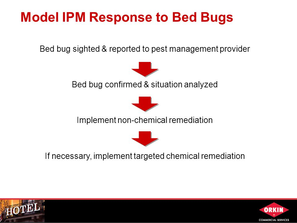 Bed bug sighted & reported to pest management provider Bed bug confirmed & situation analyzed Implement non-chemical remediation If necessary, implement targeted chemical remediation Model IPM Response to Bed Bugs
