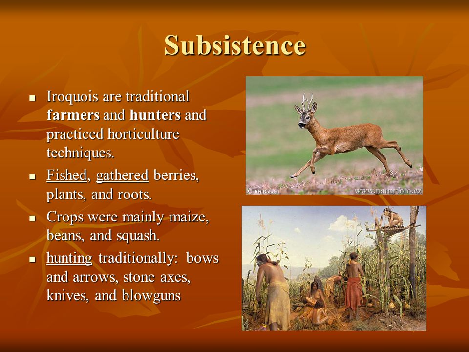 Subsistence Iroquois are traditional farmers and hunters and practiced horticulture techniques.