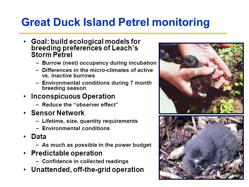 Great Duck Island Petrel monitoring Goal: build ecological models for breeding preferences of Leach's Storm Petrel –Burrow (nest) occupancy during inc