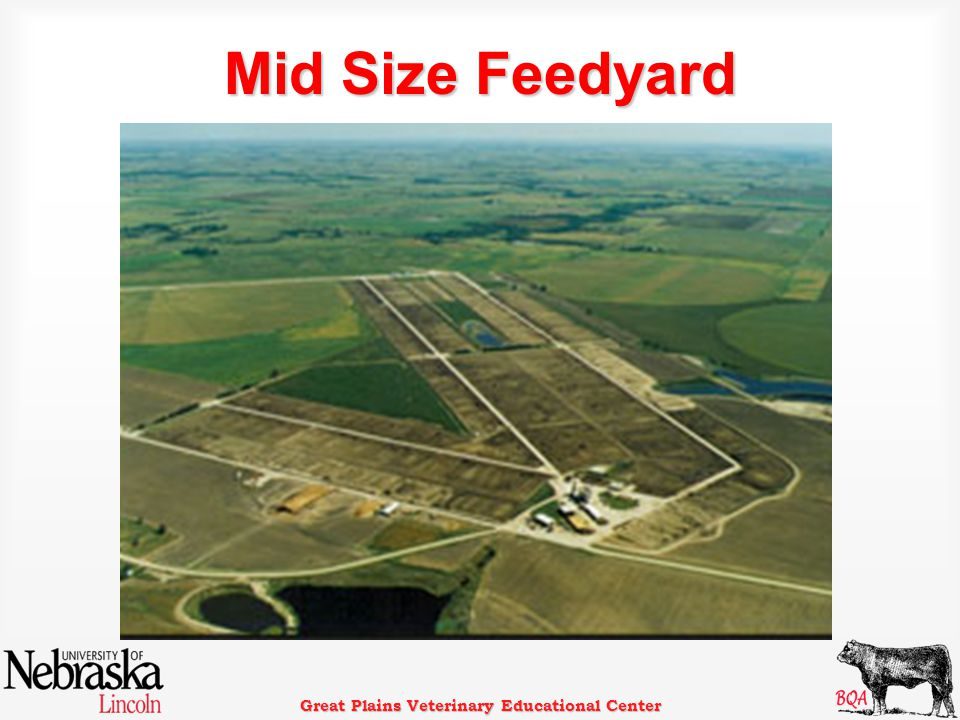 Great Plains Veterinary Educational Center Mid Size Feedyard