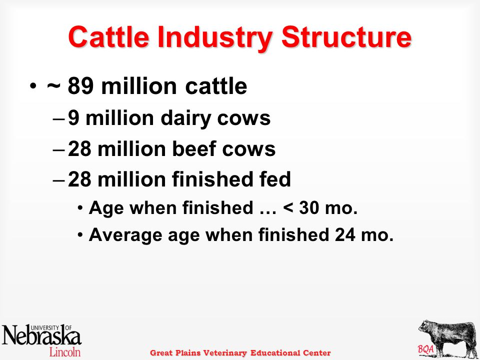 Cattle Industry Structure ~ 89 million cattle –9 million dairy cows –28 million beef cows –28 million finished fed Age when finished … < 30 mo.