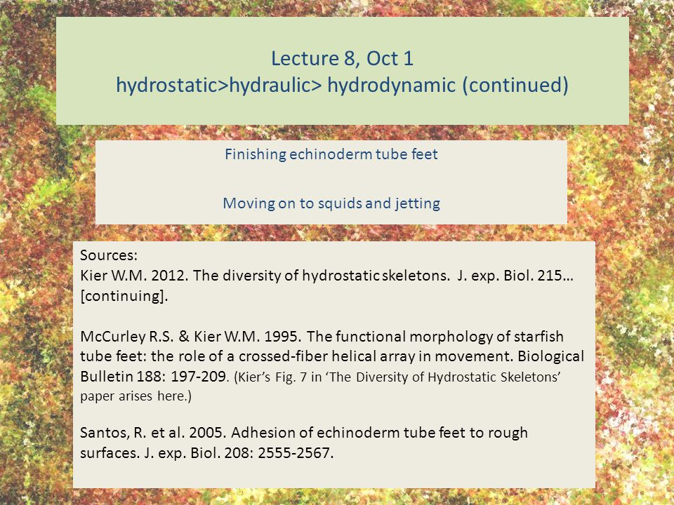 Lecture 8, Oct 1 hydrostatic>hydraulic> hydrodynamic (continued) Finishing echinoderm tube feet Moving on to squids and jetting Sources: Kier W.M.