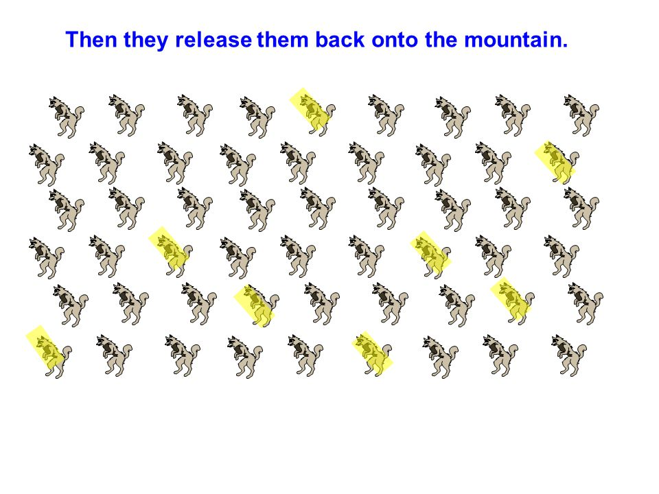 Then they release them back onto the mountain.
