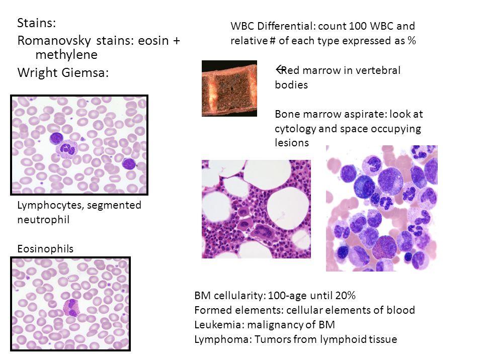 Stains: Romanovsky stains: eosin + methylene Wright Giemsa: Lymphocytes, segmented neutrophil Eosinophils WBC Differential: count 100 WBC and relative