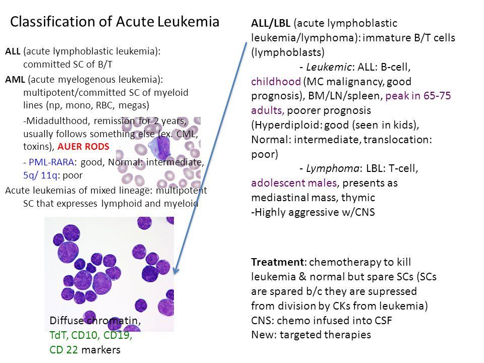 Classification of Acute Leukemia ALL (acute lymphoblastic leukemia): committed SC of B/T AML (acute myelogenous leukemia): multipotent/committed SC of