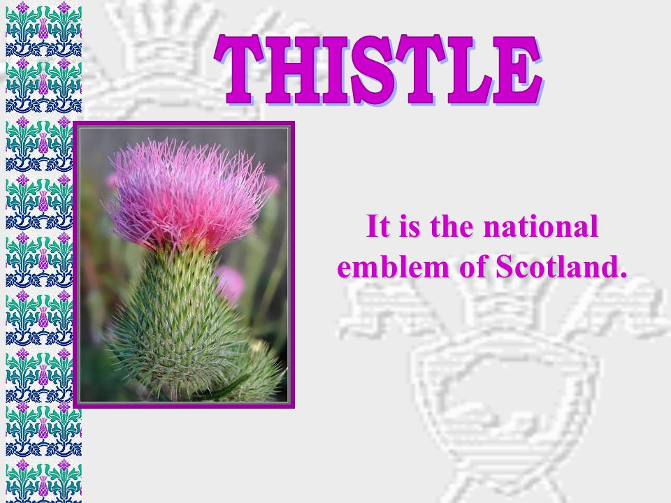 It is the national emblem of Scotland.