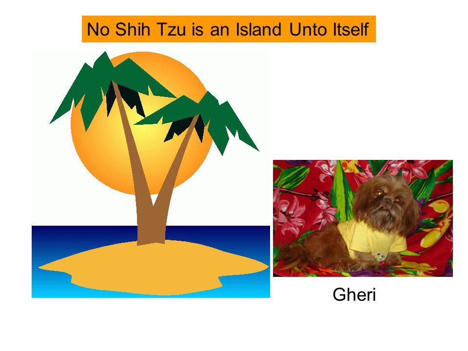No Shih Tzu is an Island Unto Itself Gheri