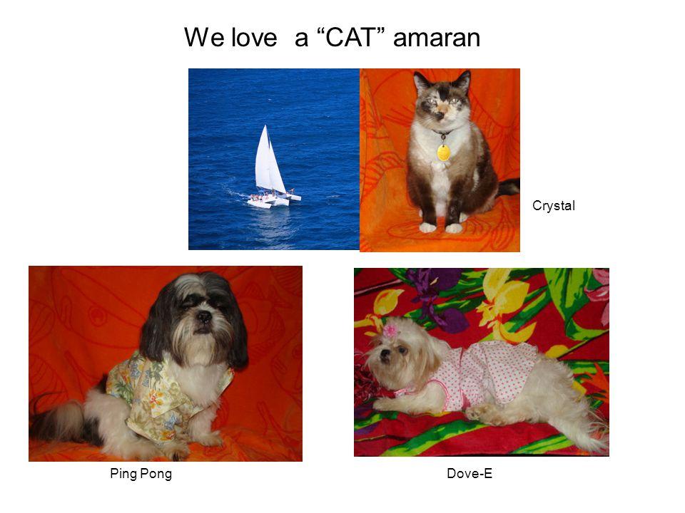 "We love a ""CAT"" amaran Ping PongDove-E Crystal"
