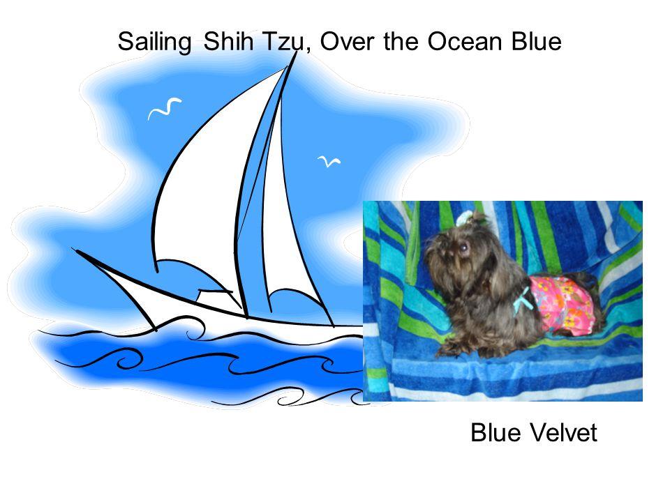 Sailing Shih Tzu, Over the Ocean Blue Blue Velvet