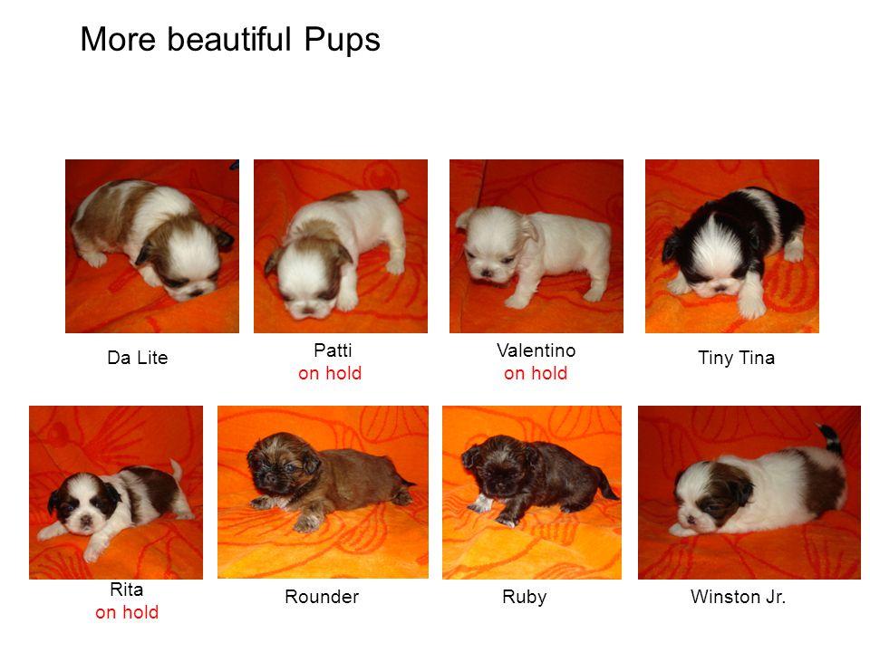 Da Lite Patti on hold Valentino on hold Tiny Tina Rita on hold RounderRubyWinston Jr. More beautiful Pups