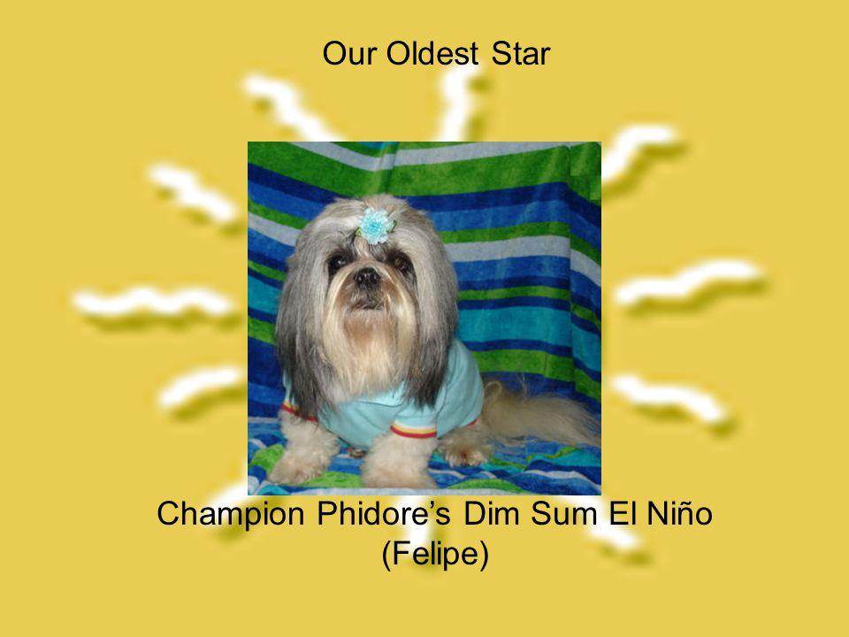 Champion Phidore's Dim Sum El Niño (Felipe) Our Oldest Star
