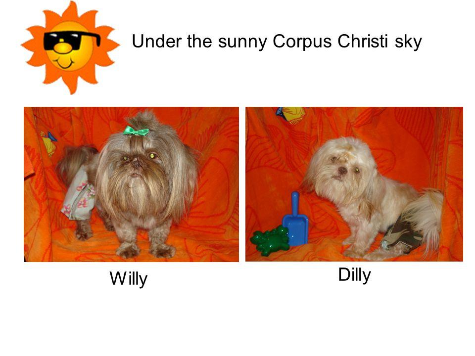 Under the sunny Corpus Christi sky Willy Dilly