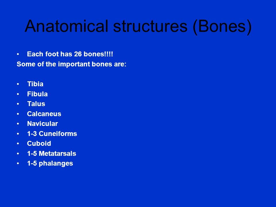 Anatomical structures (Bones) Each foot has 26 bones!!!.