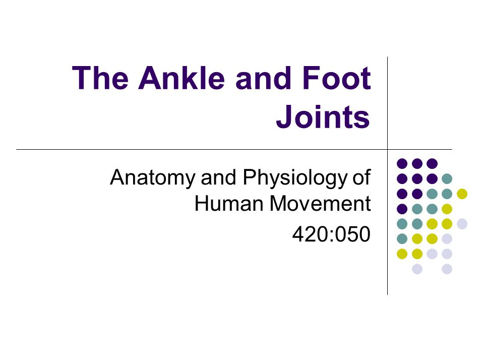 The Ankle and Foot Joints Anatomy and Physiology of Human Movement 420:050