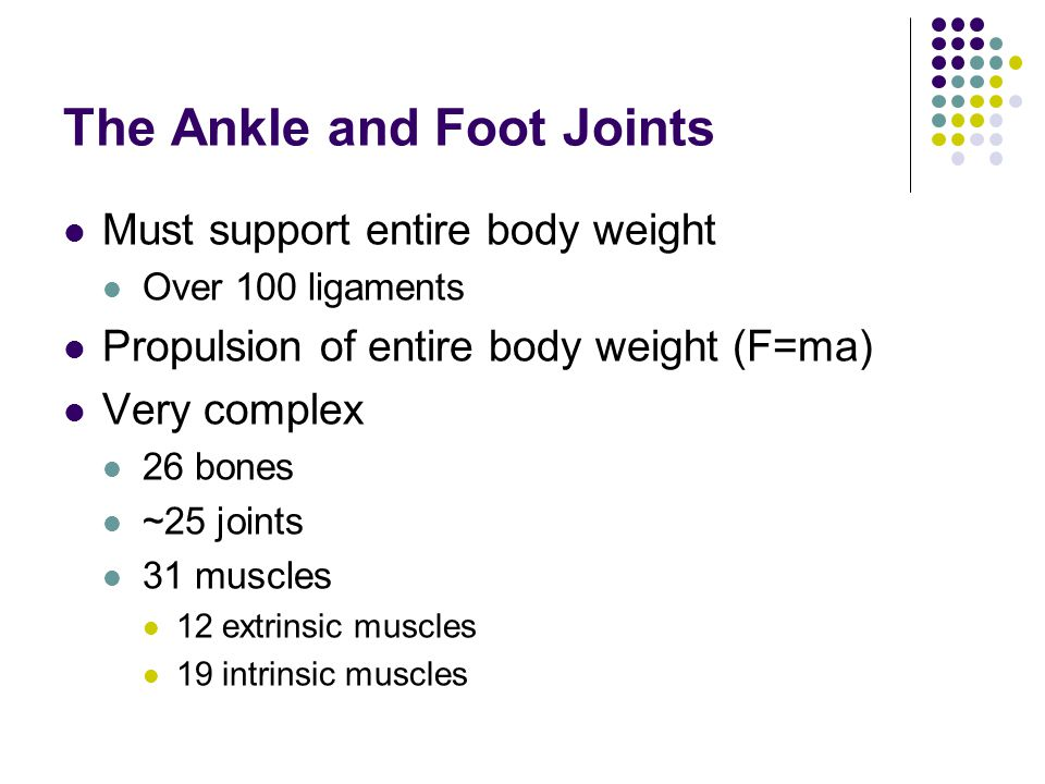 The Ankle and Foot Joints Must support entire body weight Over 100 ligaments Propulsion of entire body weight (F=ma) Very complex 26 bones ~25 joints