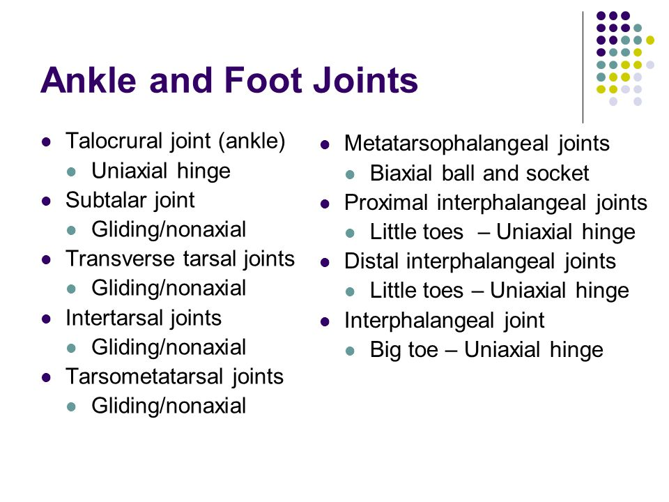 Ankle and Foot Joints Talocrural joint (ankle) Uniaxial hinge Subtalar joint Gliding/nonaxial Transverse tarsal joints Gliding/nonaxial Intertarsal jo