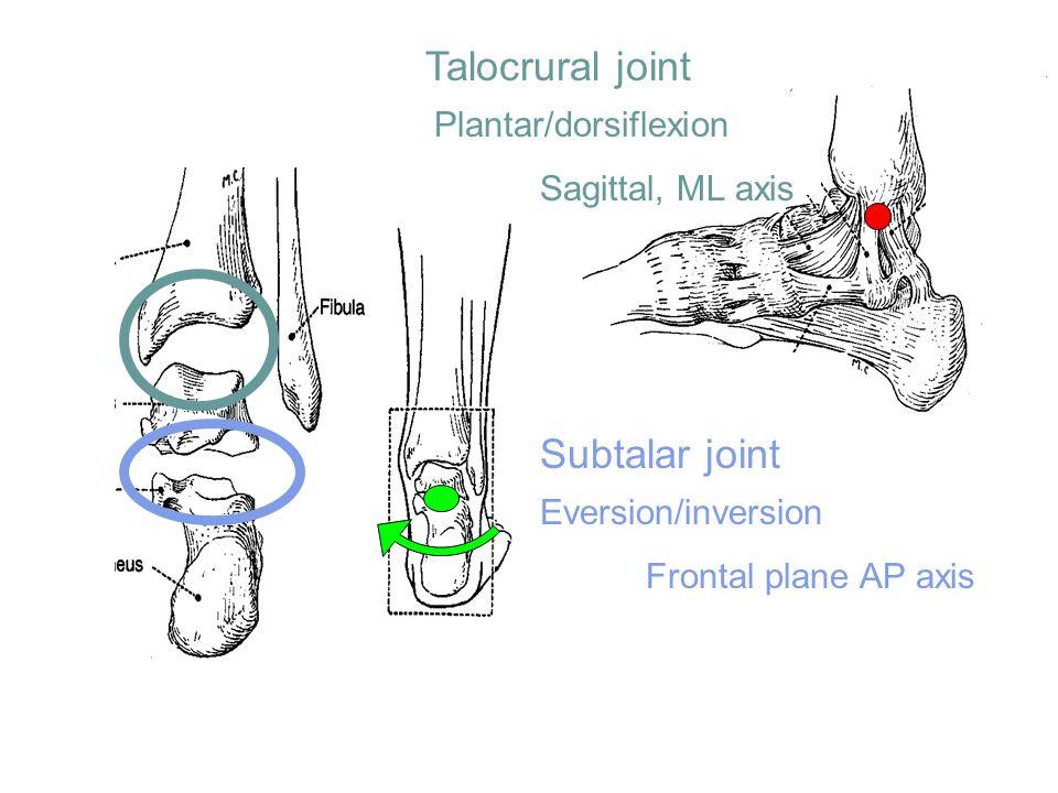 Talocrural joint Subtalar joint Plantar/dorsiflexion Sagittal, ML axis Eversion/inversion Frontal plane AP axis