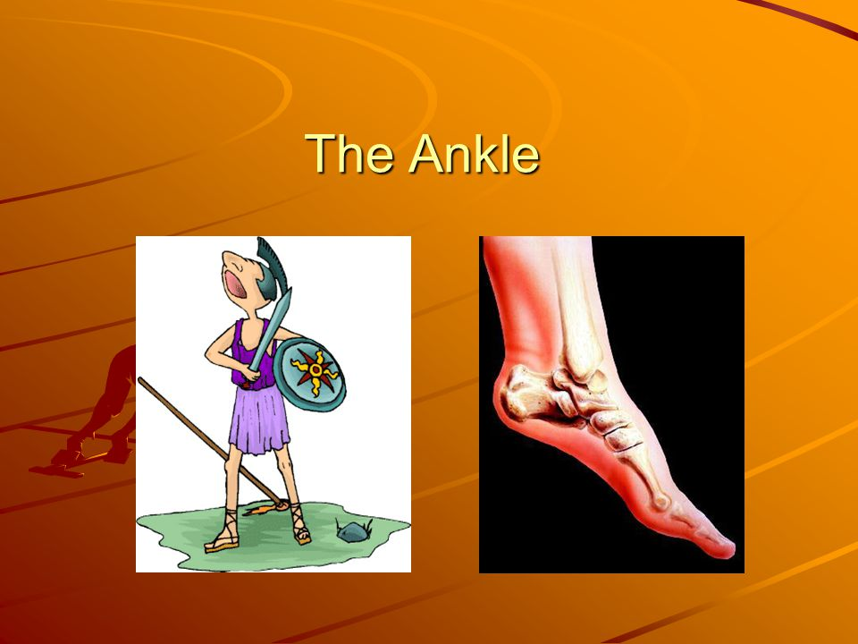 10) Where can you palpate the tibialis anterior muscle.