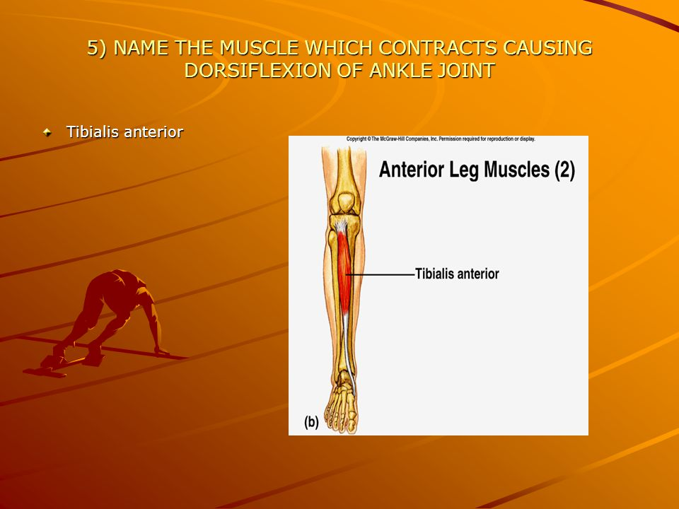 6) WHAT IS THE DISTAL MEDIAL END OF TIBIA CALLED.