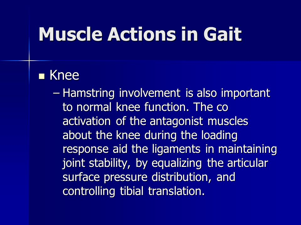 Muscle Actions in Gait Knee Knee –Hamstring involvement is also important to normal knee function. The co activation of the antagonist muscles about t