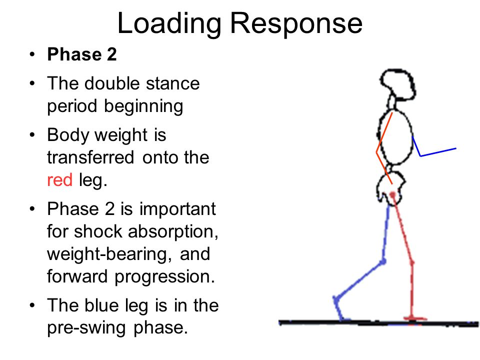 Loading Response Phase 2 The double stance period beginning Body weight is transferred onto the red leg.