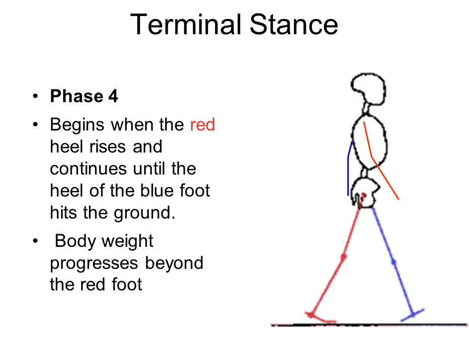 Terminal Stance Phase 4 Begins when the red heel rises and continues until the heel of the blue foot hits the ground.