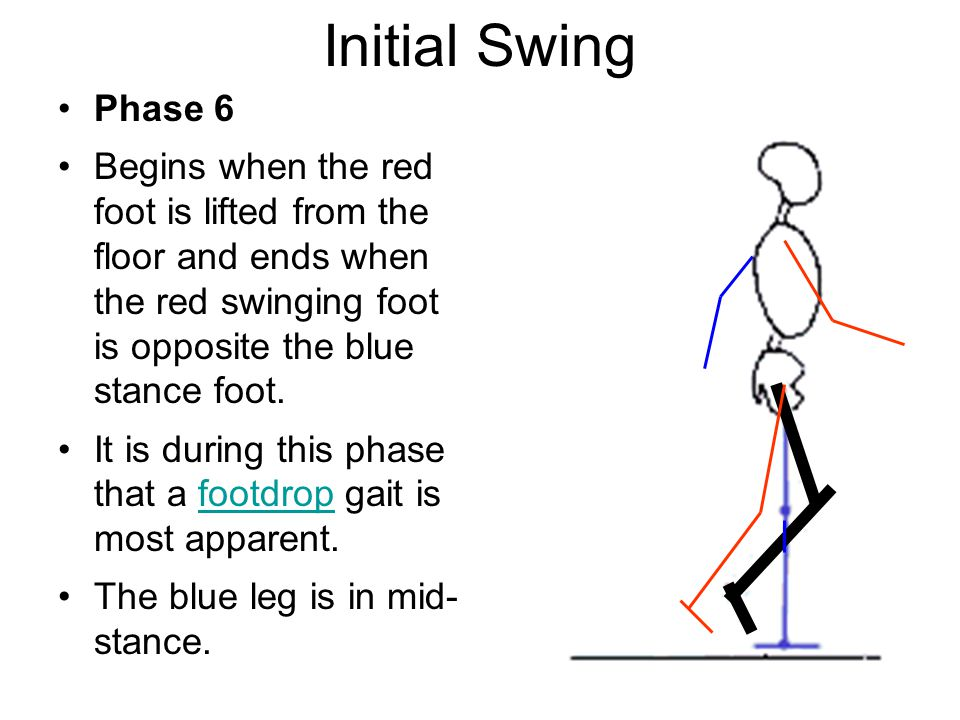 Initial Swing Phase 6 Begins when the red foot is lifted from the floor and ends when the red swinging foot is opposite the blue stance foot.
