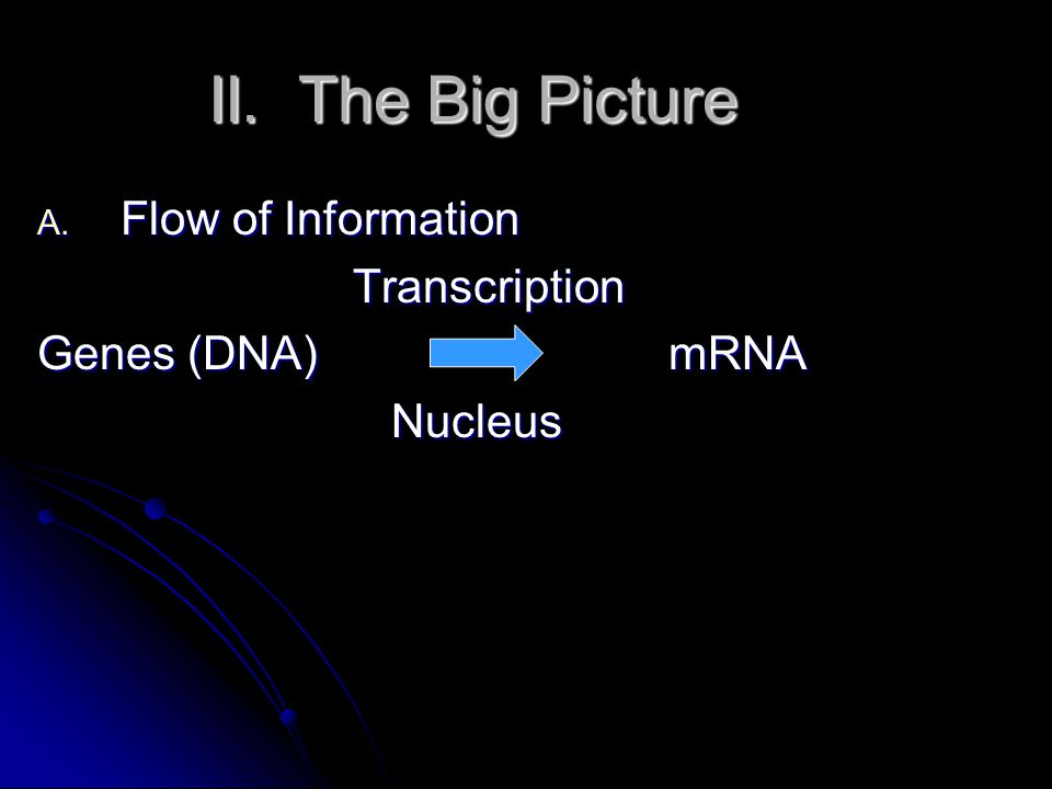 II. The Big Picture A. Flow of Information Transcription Genes (DNA) mRNA Nucleus Nucleus