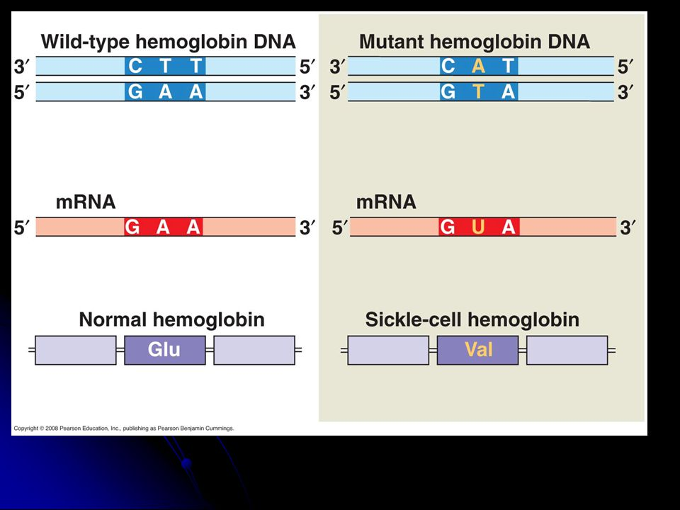 V. Mucky Mutations A. Overview 1. Changes in genetic make-up of a cell 2.