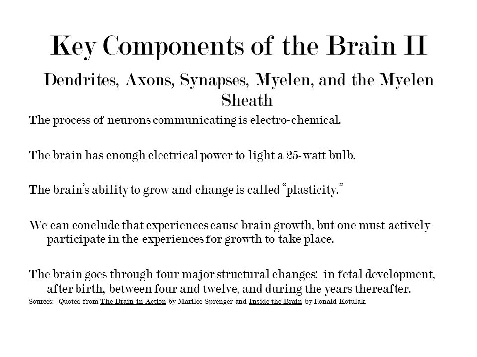 Key Components of the Brain II Dendrites, Axons, Synapses, Myelen, and the Myelen Sheath The process of neurons communicating is electro-chemical.