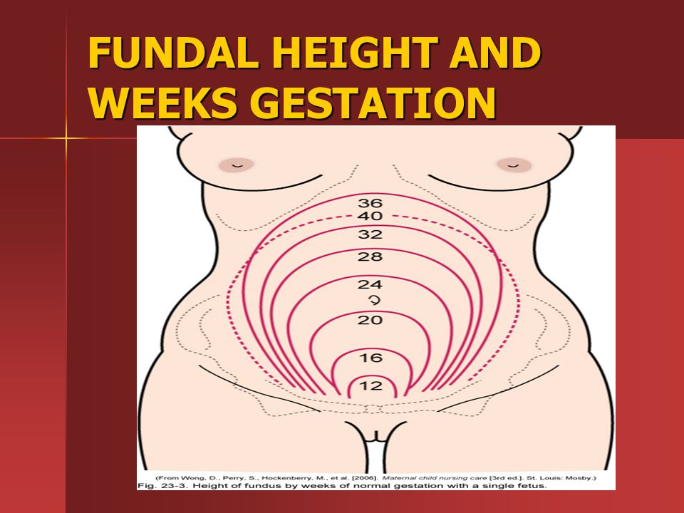 FUNDAL HEIGHT AND WEEKS GESTATION