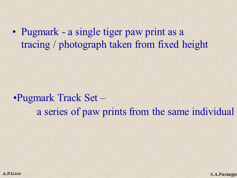 Pugmark - a single tiger paw print as a tracing / photograph taken from fixed height Pugmark Track Set – a series of paw prints from the same individual A.P.Gore S.A.Paranjpe