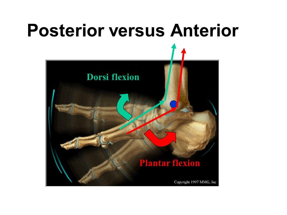 Posterior versus Anterior Plantar flexion Dorsi flexion