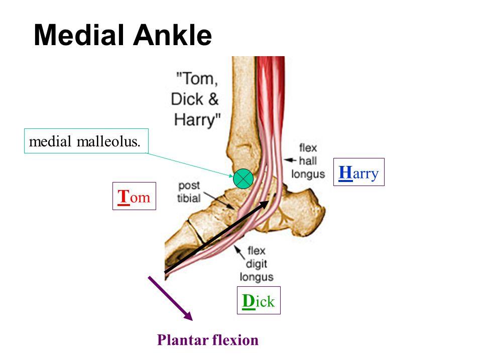 T om D ick H arry Plantar flexion Medial Ankle medial malleolus.