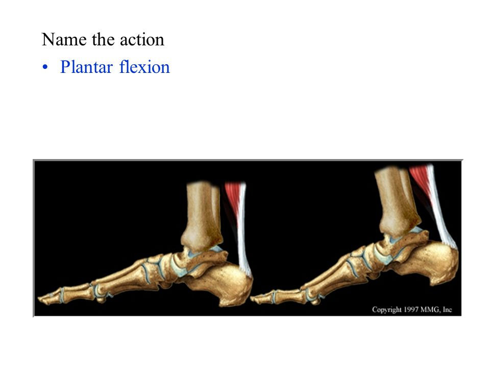 Name the action Plantar flexion