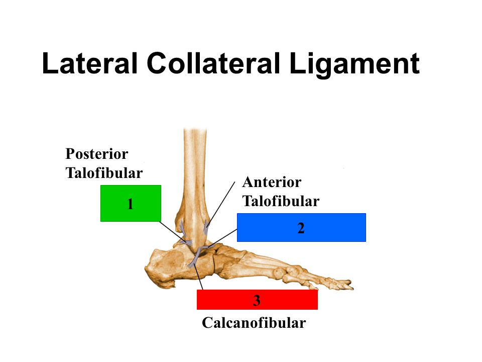 Lateral Collateral Ligament 1 2 3 Posterior Talofibular Anterior Talofibular Calcanofibular