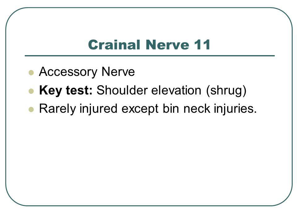 Crainal Nerve 11 Accessory Nerve Key test: Shoulder elevation (shrug) Rarely injured except bin neck injuries.