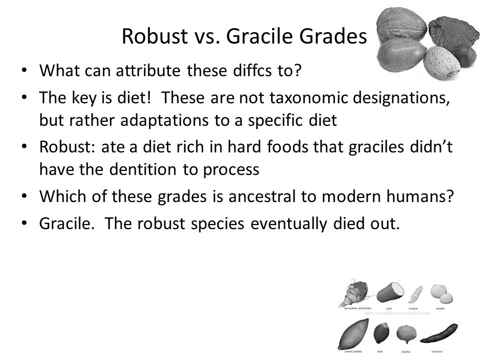Robust vs. Gracile Grades What can attribute these diffcs to? The key is diet! These are not taxonomic designations, but rather adaptations to a speci
