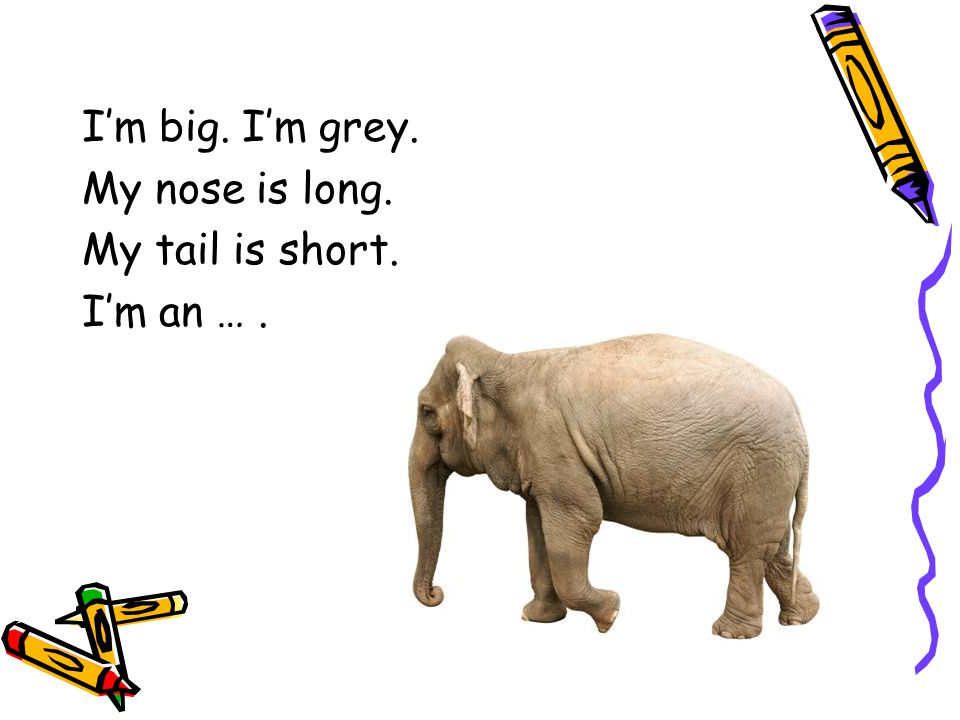 I'm big. I'm grey. My nose is long. My tail is short. I'm an ….