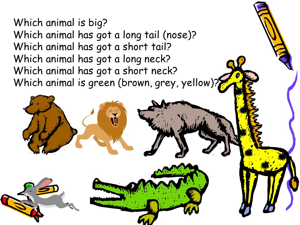 Which animal is big? Which animal has got a long tail (nose)? Which animal has got a short tail? Which animal has got a long neck? Which animal has go