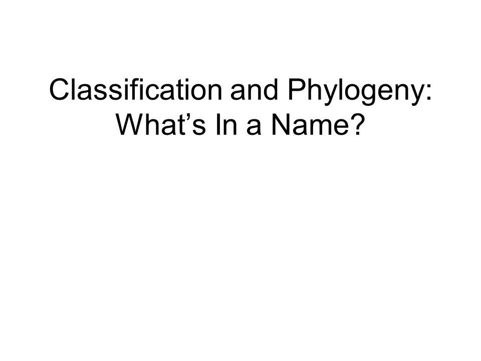 Constructing a cladogram How many synapomorphies do each pair of organisms share?