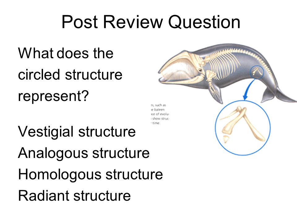 What does the circled structure represent? Vestigial structure Analogous structure Homologous structure Radiant structure