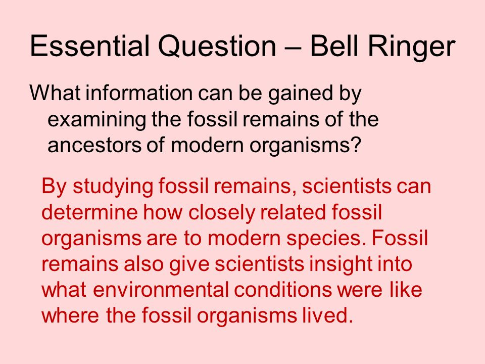 Essential Question – Bell Ringer What information can be gained by examining the fossil remains of the ancestors of modern organisms? By studying foss