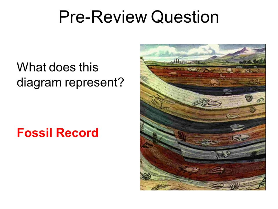 How does the fossil record give evidence for common descent?