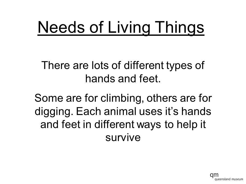 Needs of Living Things There are lots of different types of hands and feet.