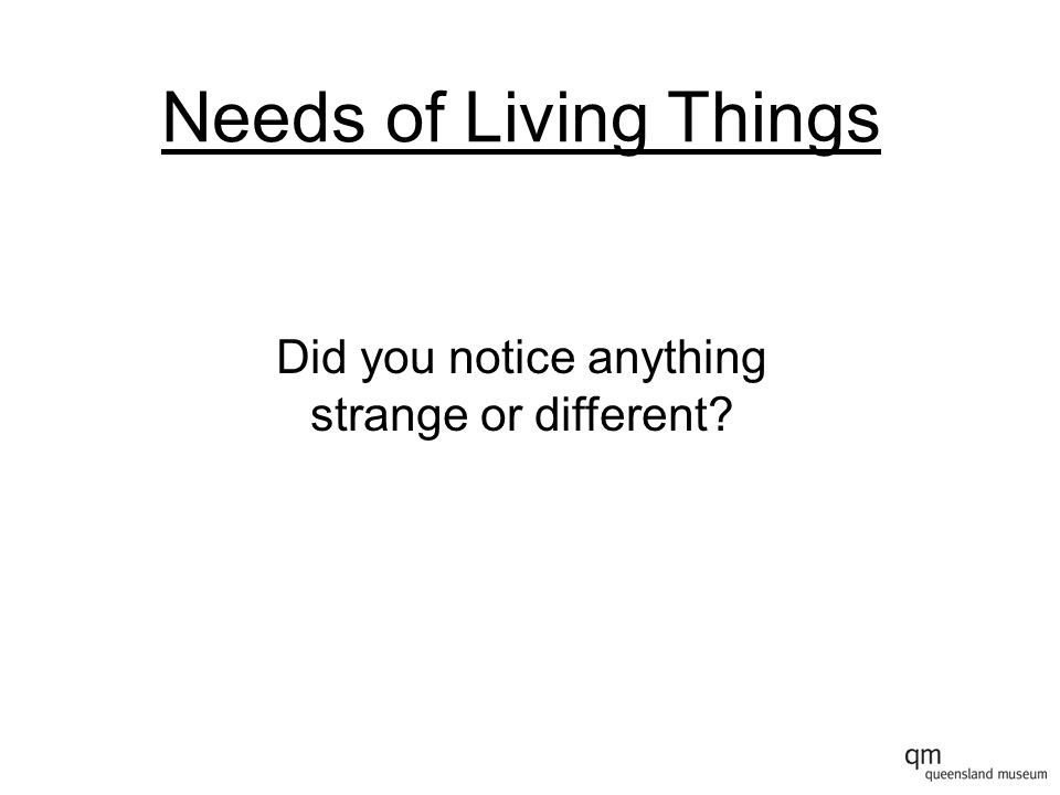 Needs of Living Things Did you notice anything strange or different?