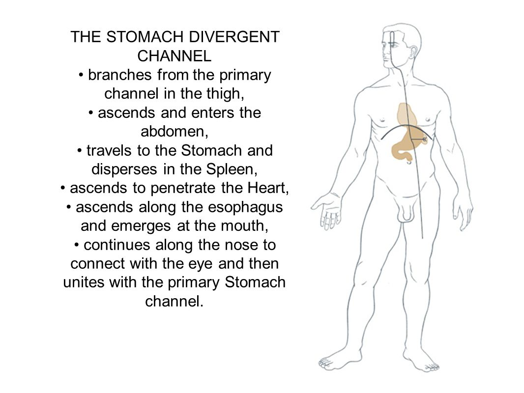 THE STOMACH DIVERGENT CHANNEL branches from the primary channel in the thigh, ascends and enters the abdomen, travels to the Stomach and disperses in