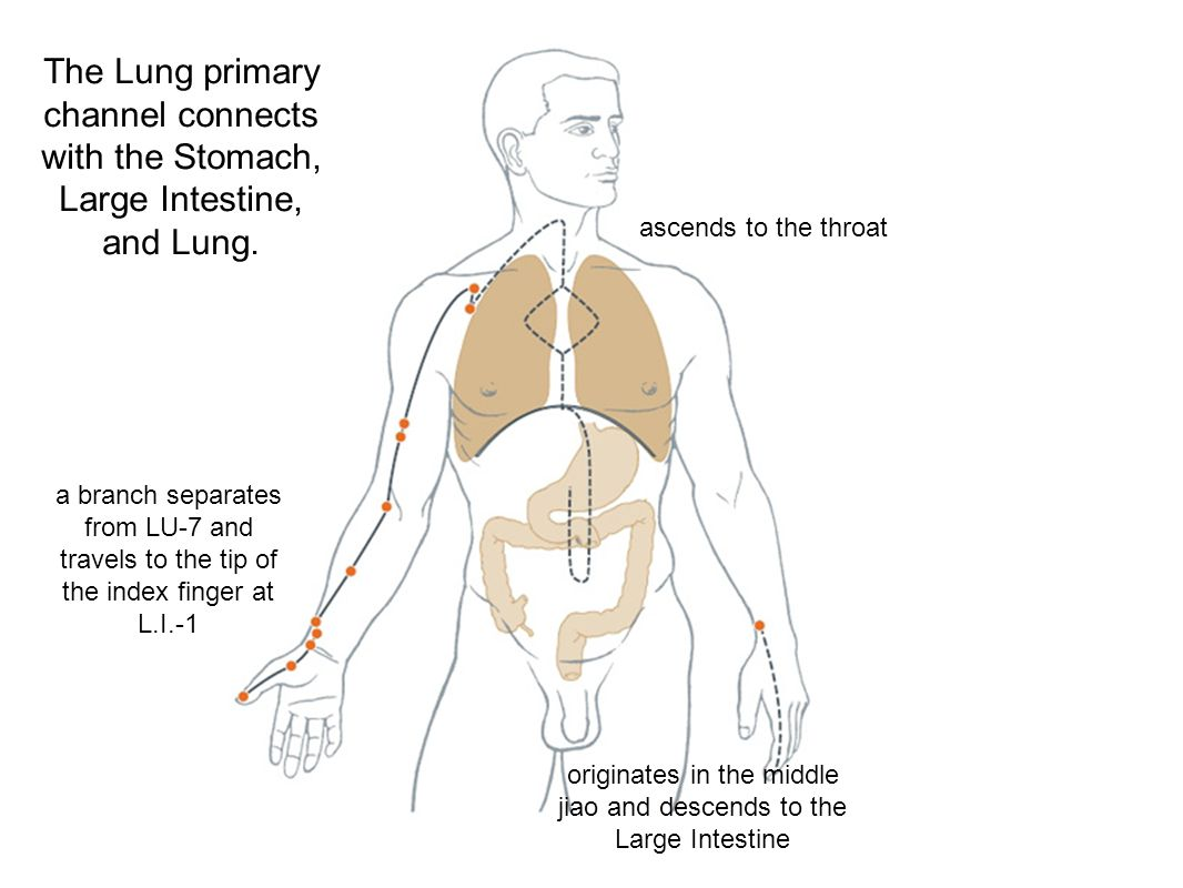 The Lung primary channel connects with the Stomach, Large Intestine, and Lung. a branch separates from LU-7 and travels to the tip of the index finger